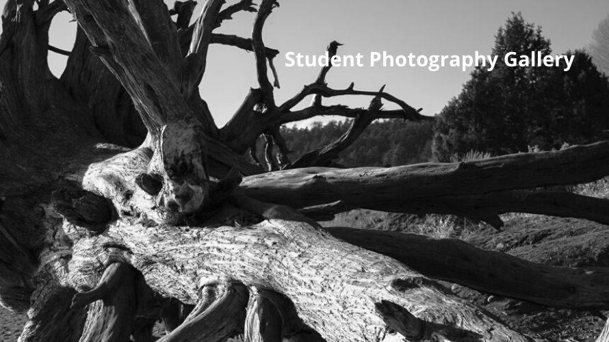 Student Photography Gallery